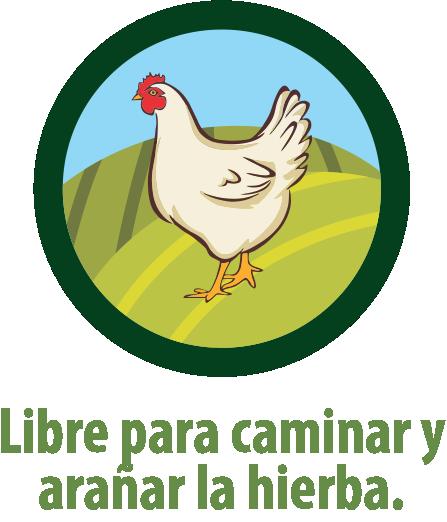 Galinha Granja Faria